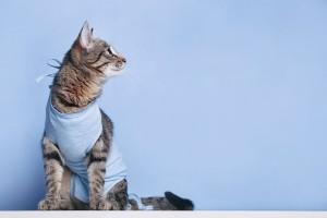 Правильный уход за животным после операции сможет предотвратить осложнения
